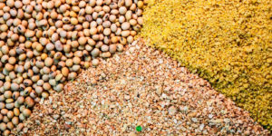 How to Start Livestock Feed Production In Nigeria Or Africa (Complete Guide)