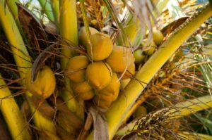 How To Start A Lucrative Coconut Farming Business In Nigeria: The Complete Guide