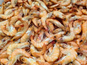 How To Start A Lucrative Shrimp Farming Business In Nigeria: The Complete Guide