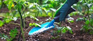 How To Start A Lucrative Organic Fertilizer Production Business In Nigeria: The Complete Guide